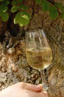 Ein Glas Wein geniessen im Gasthaus Hirschen in Schlatt